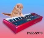 SerzhK71 аватар